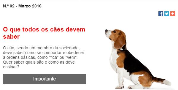 rações para animais, email marketing