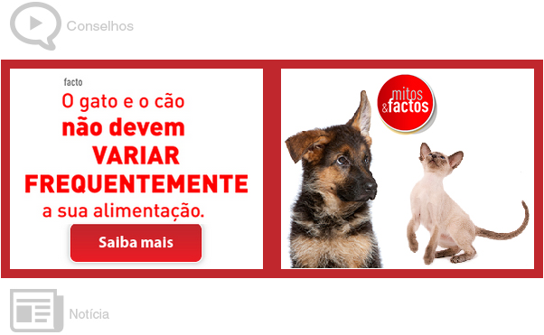 comida para animais de estimação, email marketing